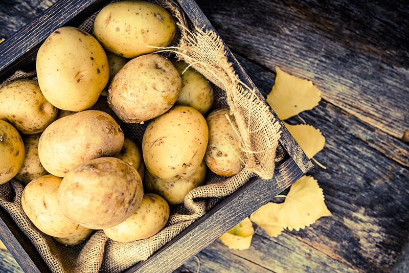 krumplis lepény